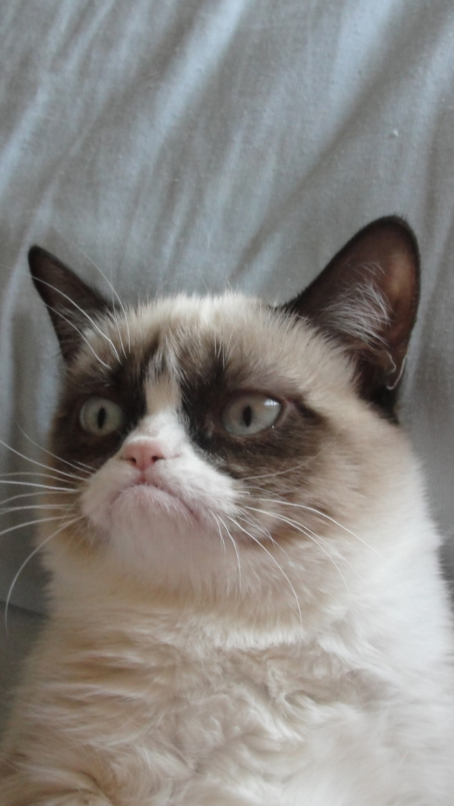 Grumpy Cat Htc Hd Wallpaper Best Htc One Wallpapers