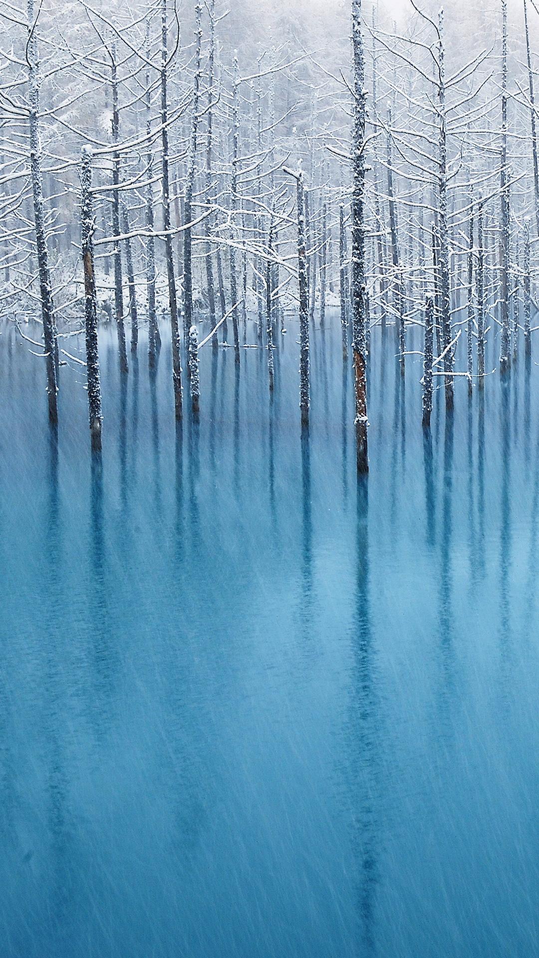 Winter trees HTC hd wallpaper