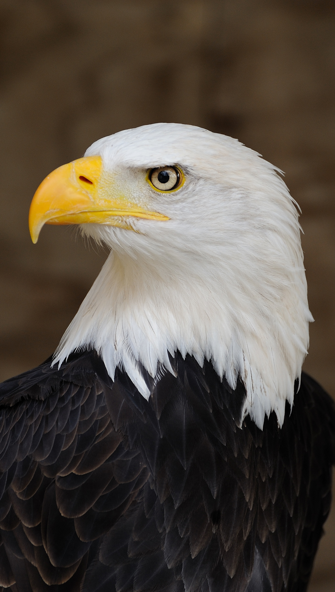 American eagle htc one wallpaper