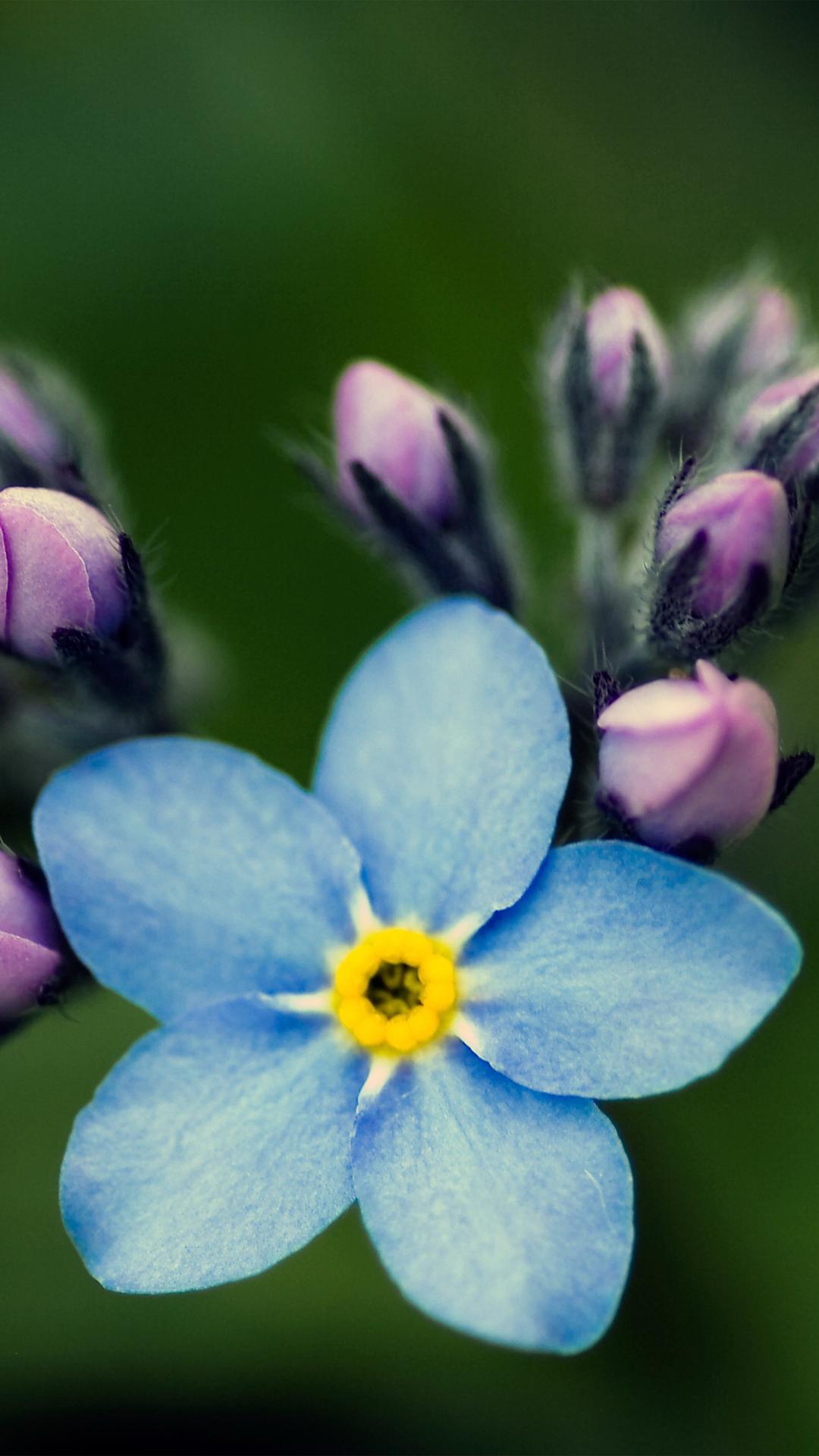 Blue flower htc wallpaper