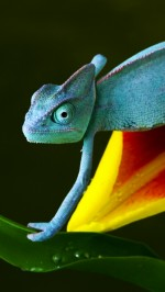 Chameleon htc one wallpaper