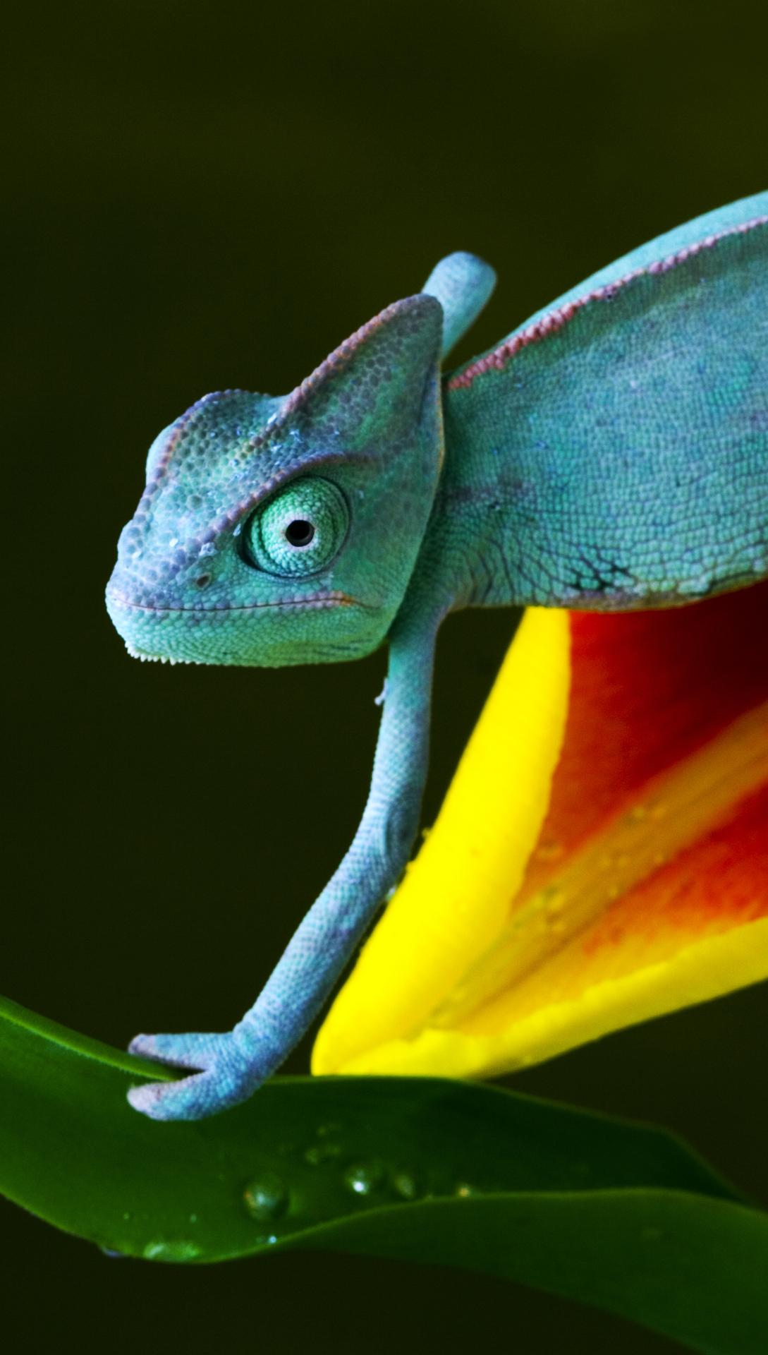 Chameleon htc one wallpaper