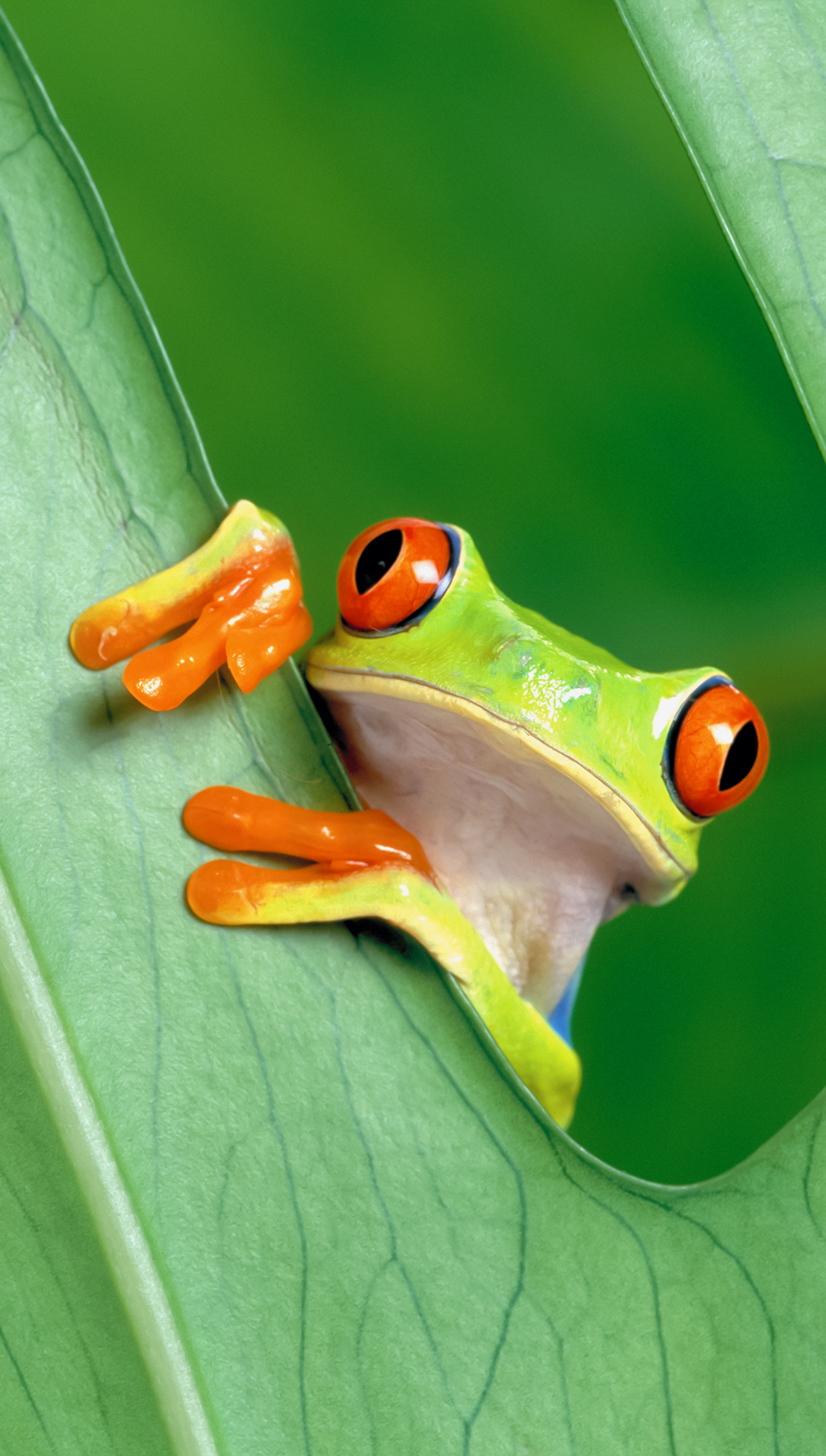 Funny frog htc one wallpaper