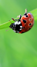 Lady bug htc one wallpaper