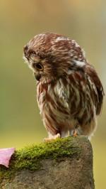 Owl htc one wallpaper