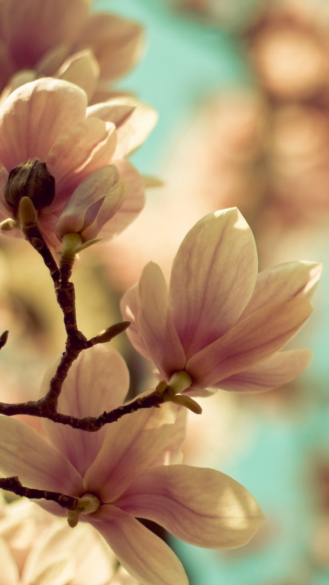 Spring Flowers Htc One Wallpaper Best Htc One Wallpapers