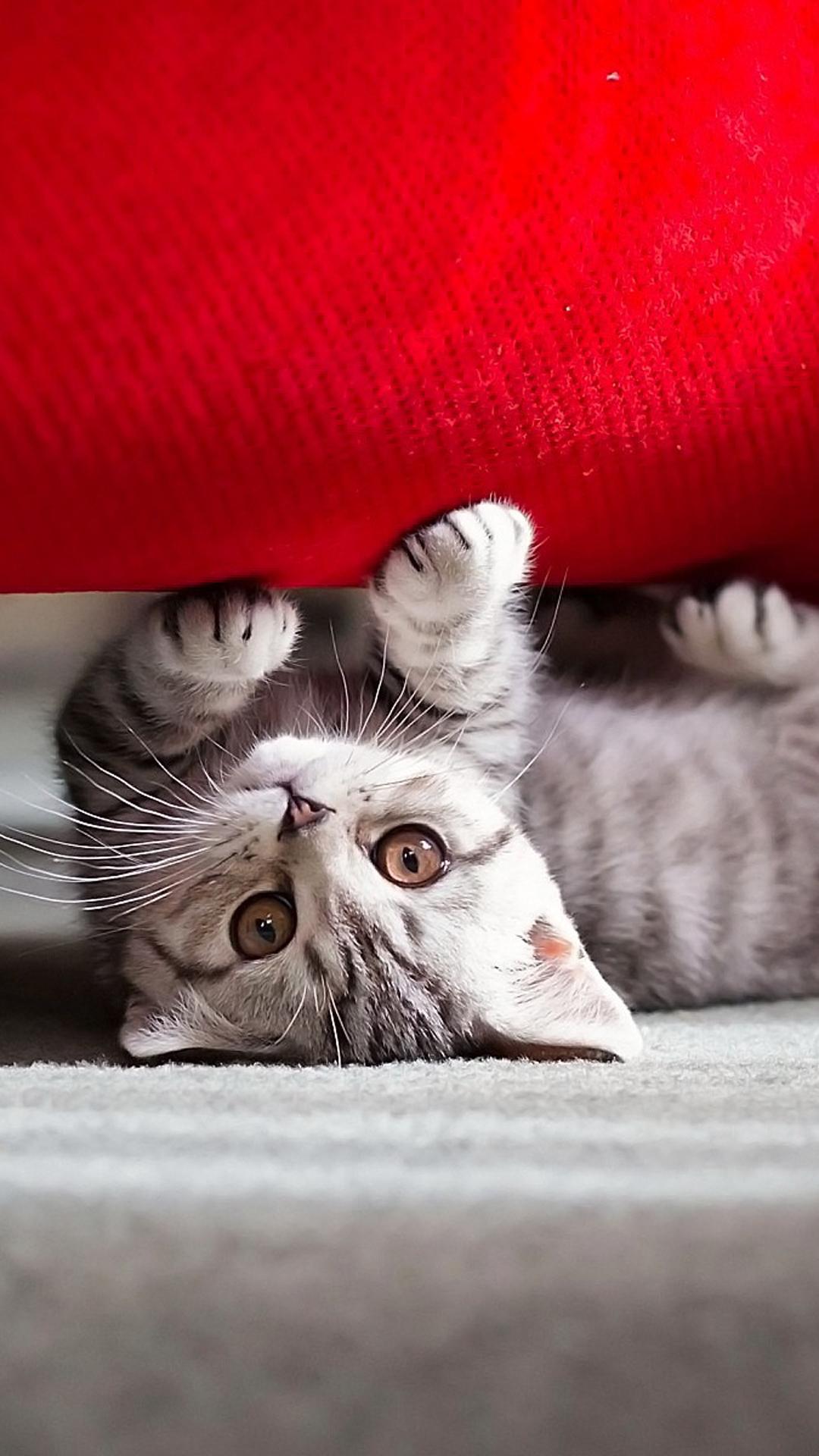 Cute kitten htc wallpaper