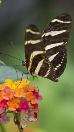 Butterfly htc one wallpaper
