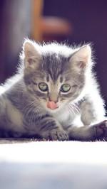 Kitten htc one wallpaper