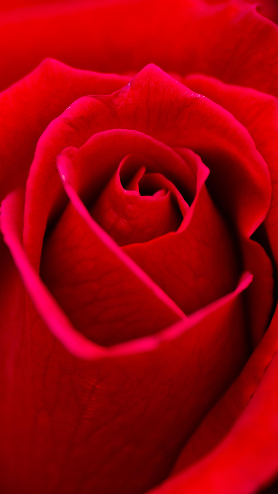 Rose Best Htc One Wallpapers Free And Easy To Download