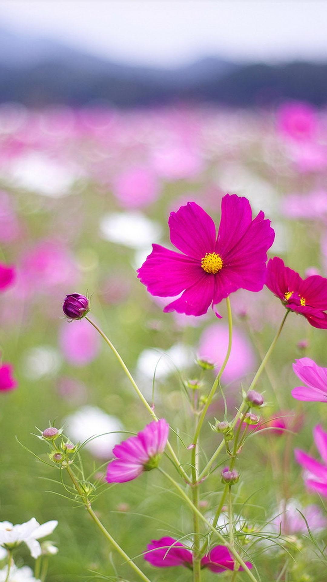 Beautiful flowers htc one wallpaper