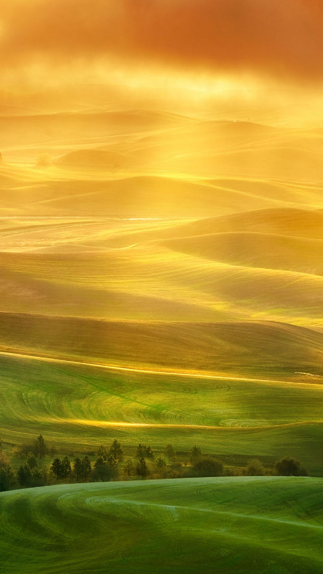 Endless farmland illustration