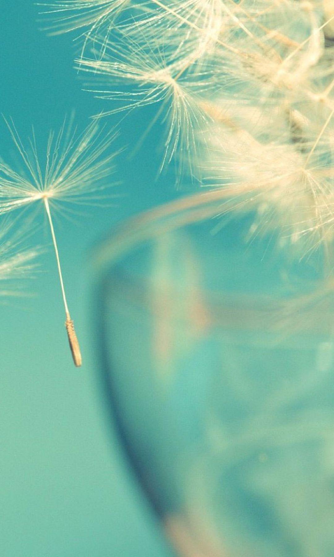 Flying Dandelions htc one wallpaper