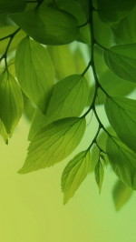 Fresh green leaves htc one wallpaper