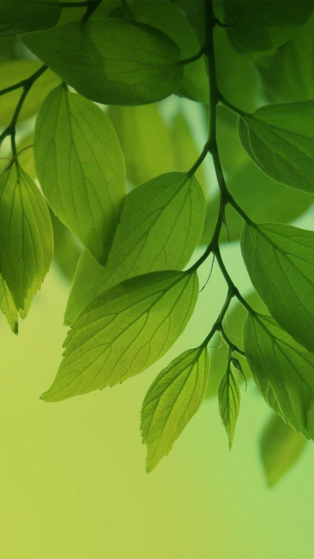 Fresh green leaves htc one wallpaper