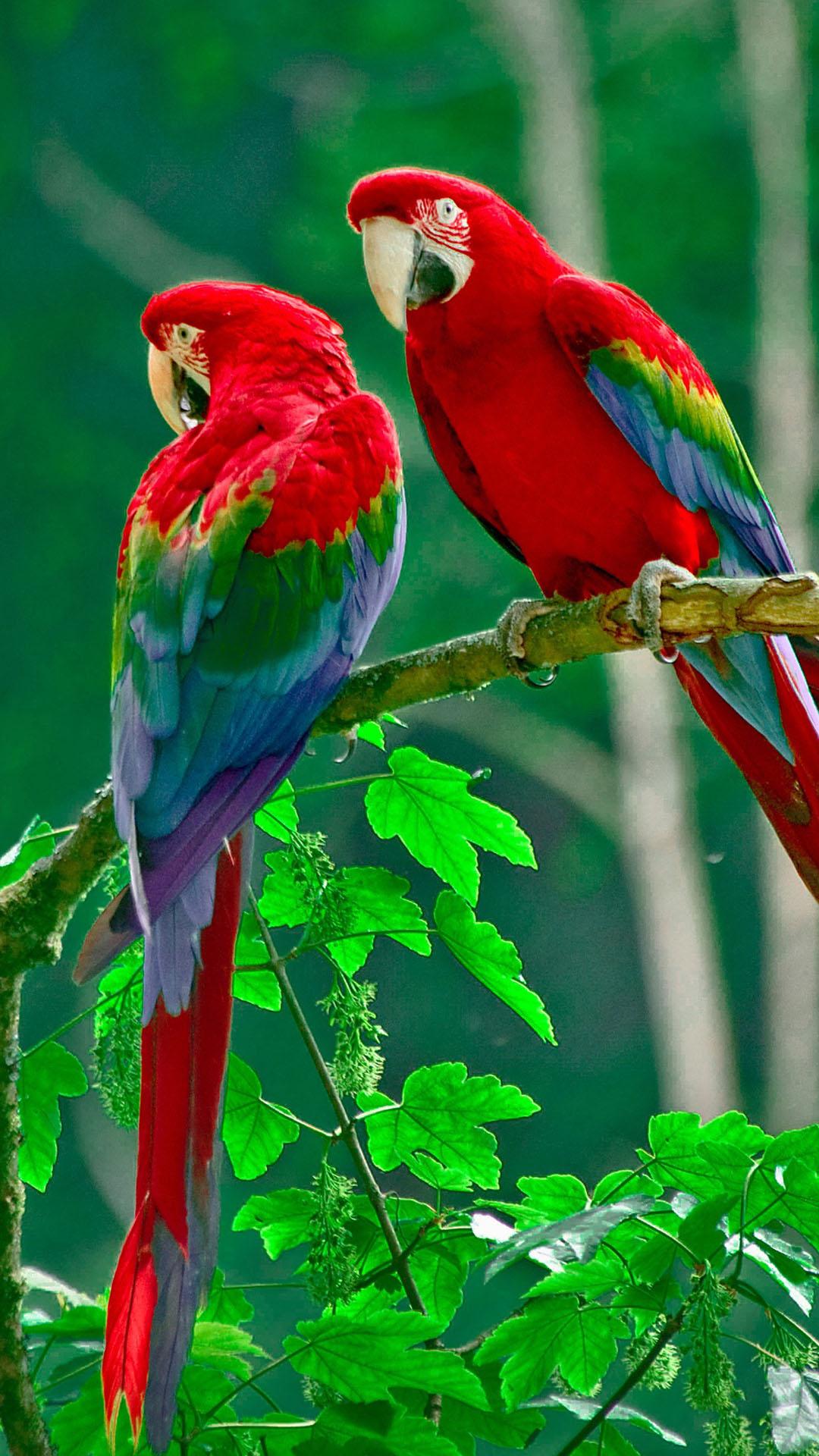Parrots Paradise htc one wallpaper