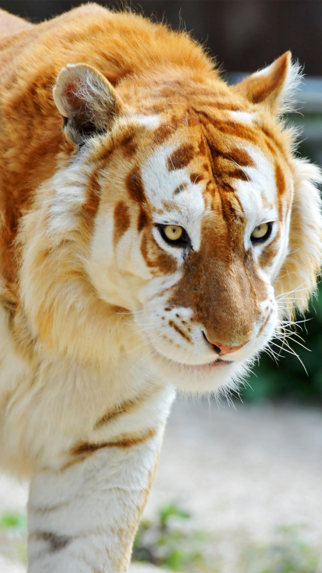 Tiger htc one wallpaper 1080x1920