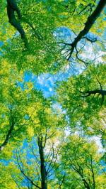 Under Green Trees