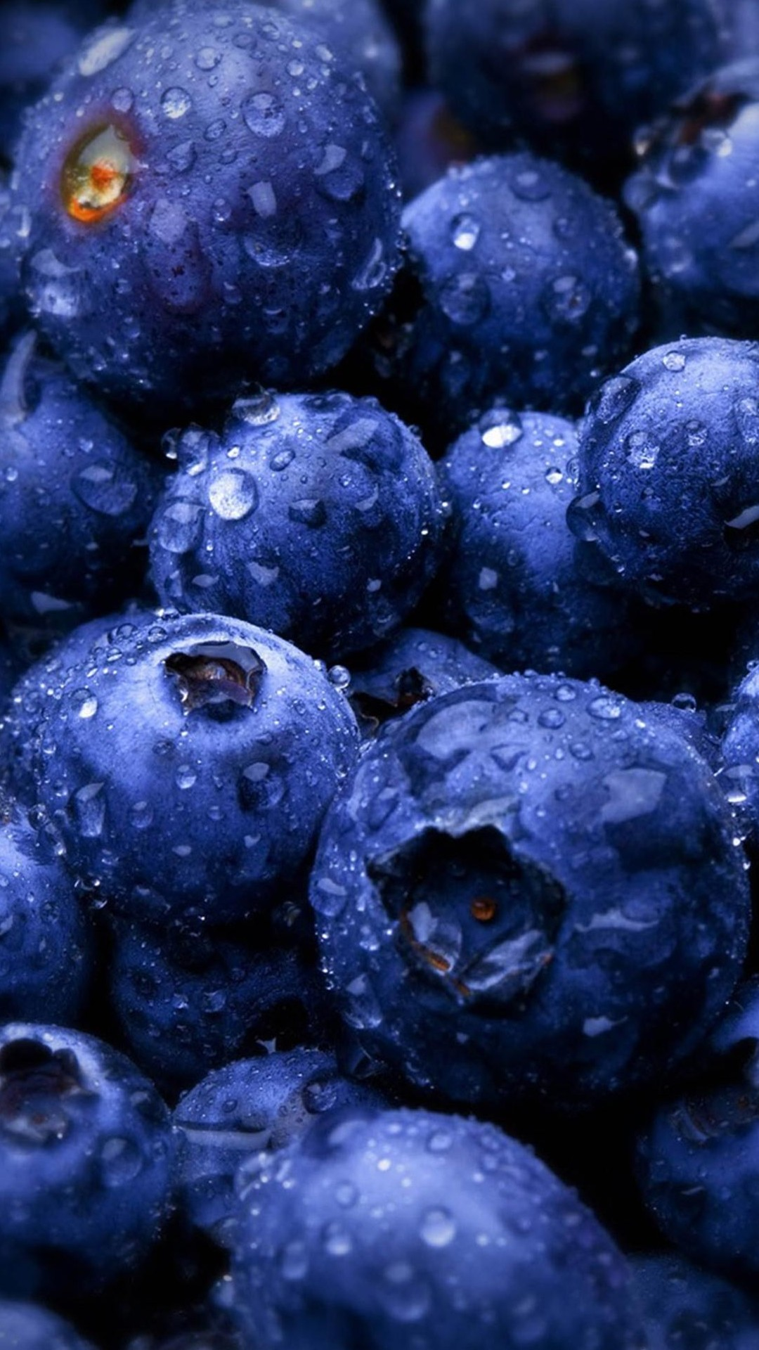 Blueberry Forest Fruits