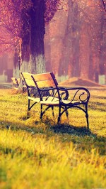 Bench In The Park Autumn