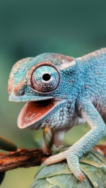 Cute chameleon