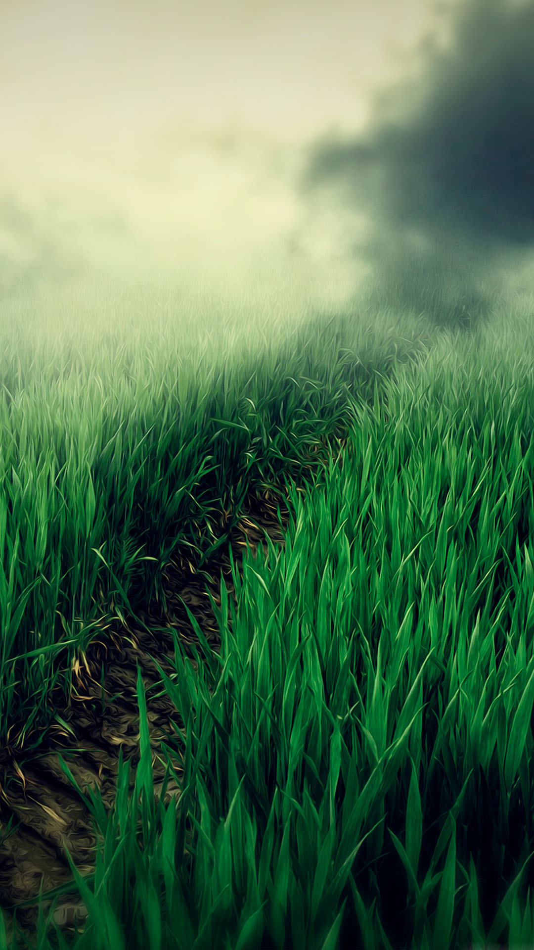 Foggy Grass Field Path