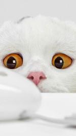 Funny white cat