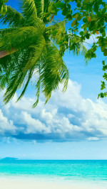 Tropical Beach Coconut Tree
