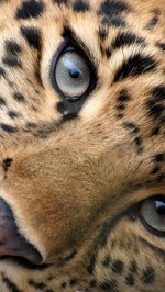 Big cat eyes