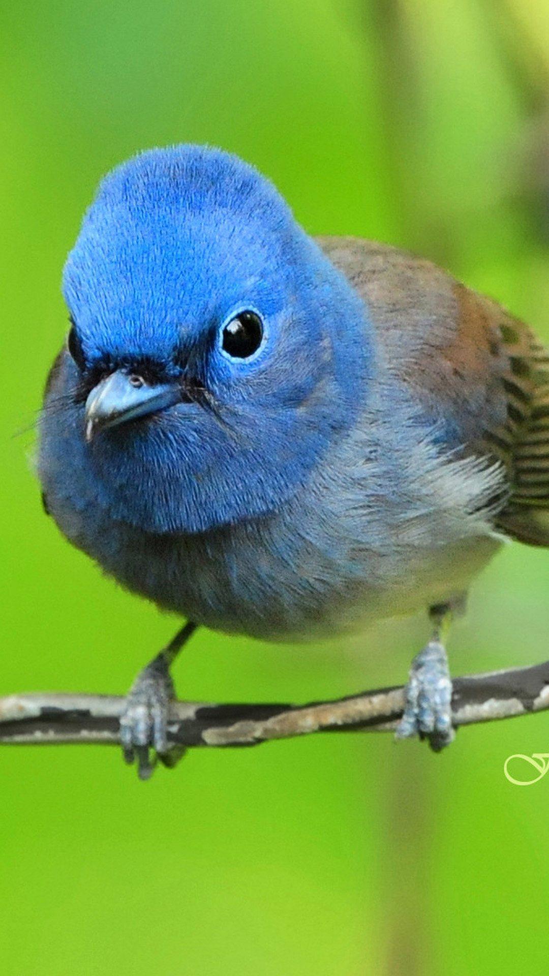 Blue exotic bird
