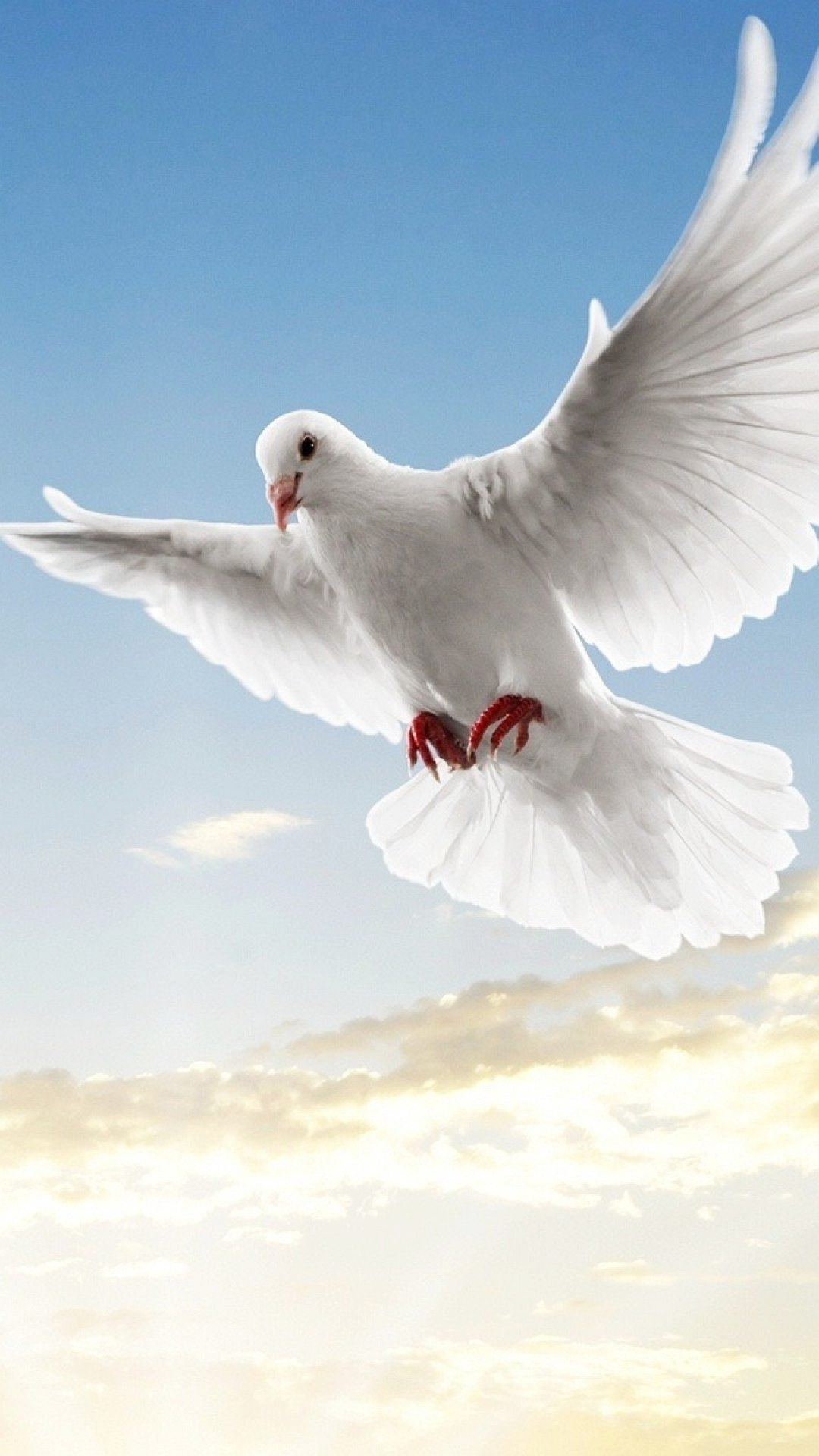 Dove peace symbol - Best htc one wallpapers, free and easy to download