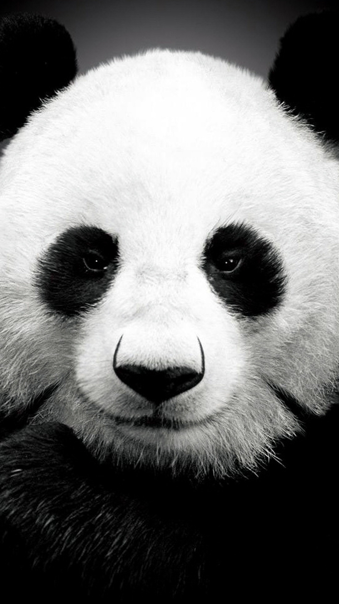 Panda Bear Best Htc One Wallpapers Free And Easy To Download