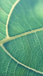 Green leaf bokeh