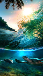 Tropical Sea Island Turtles