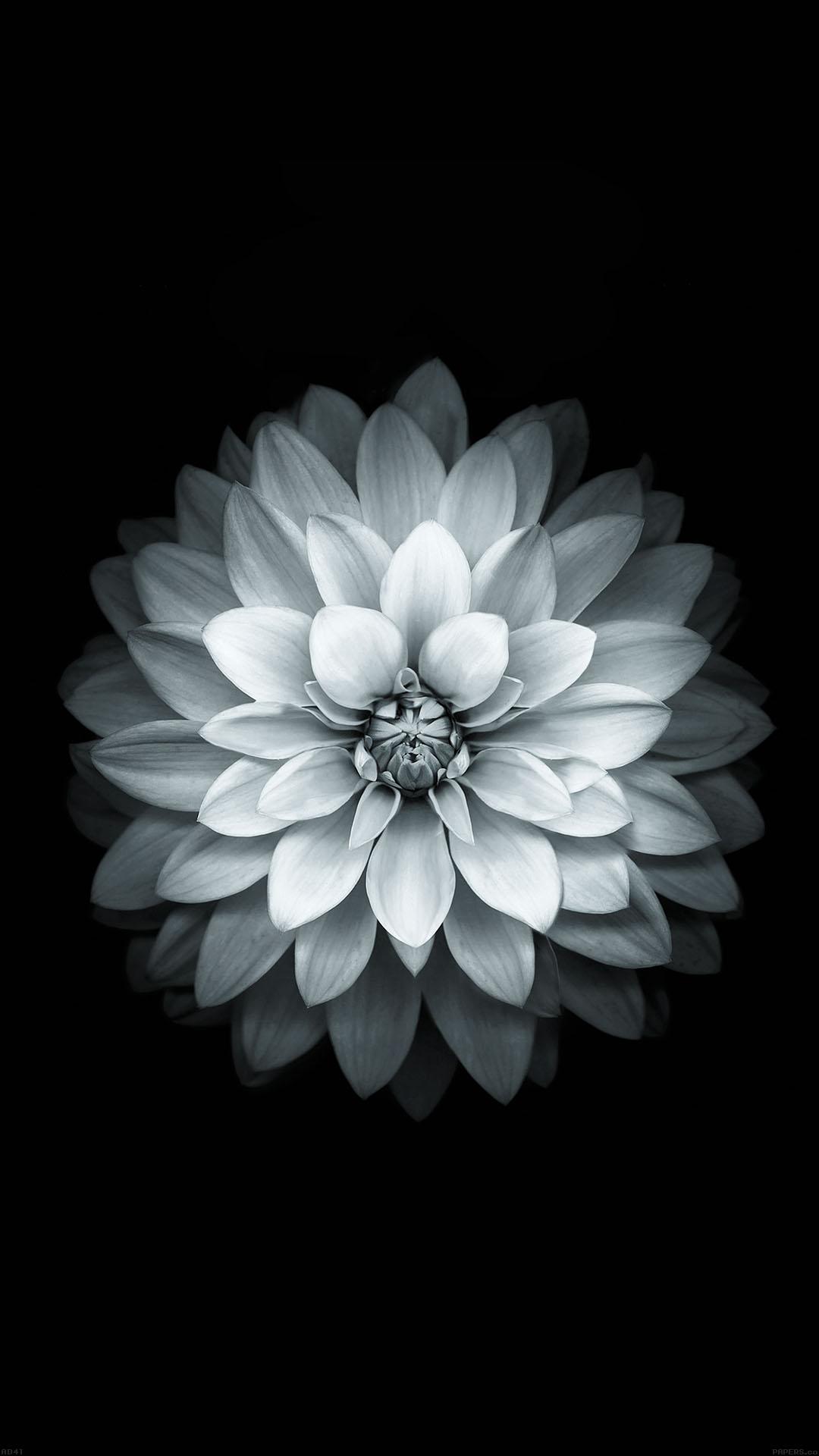 White Lotus iPhone
