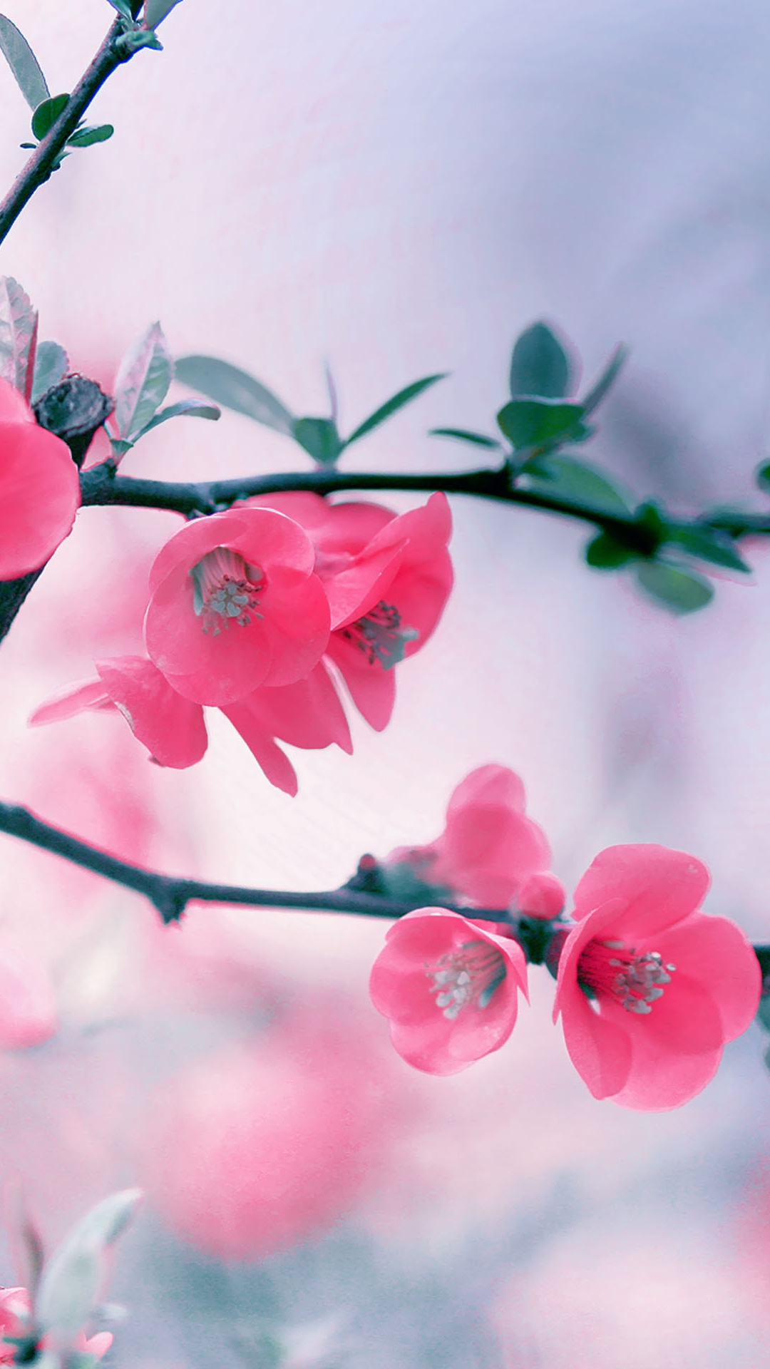 Pink blossom flowers best htc one m9 wallpapers for download pink blossom flowers voltagebd Choice Image