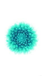 iOS8 green flower