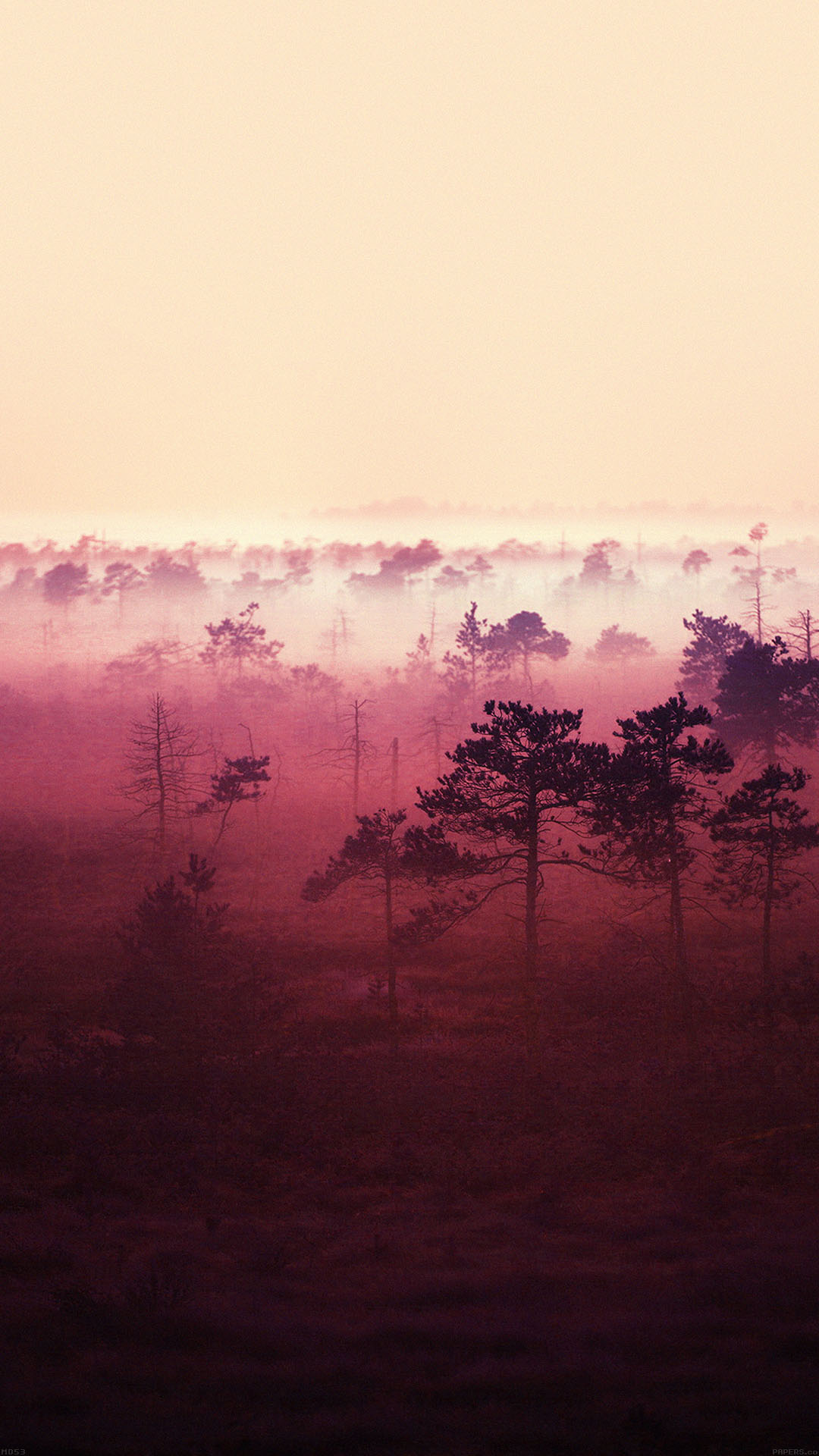 Red Sunset Woods