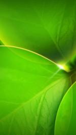Green leafs htc one wallpaper